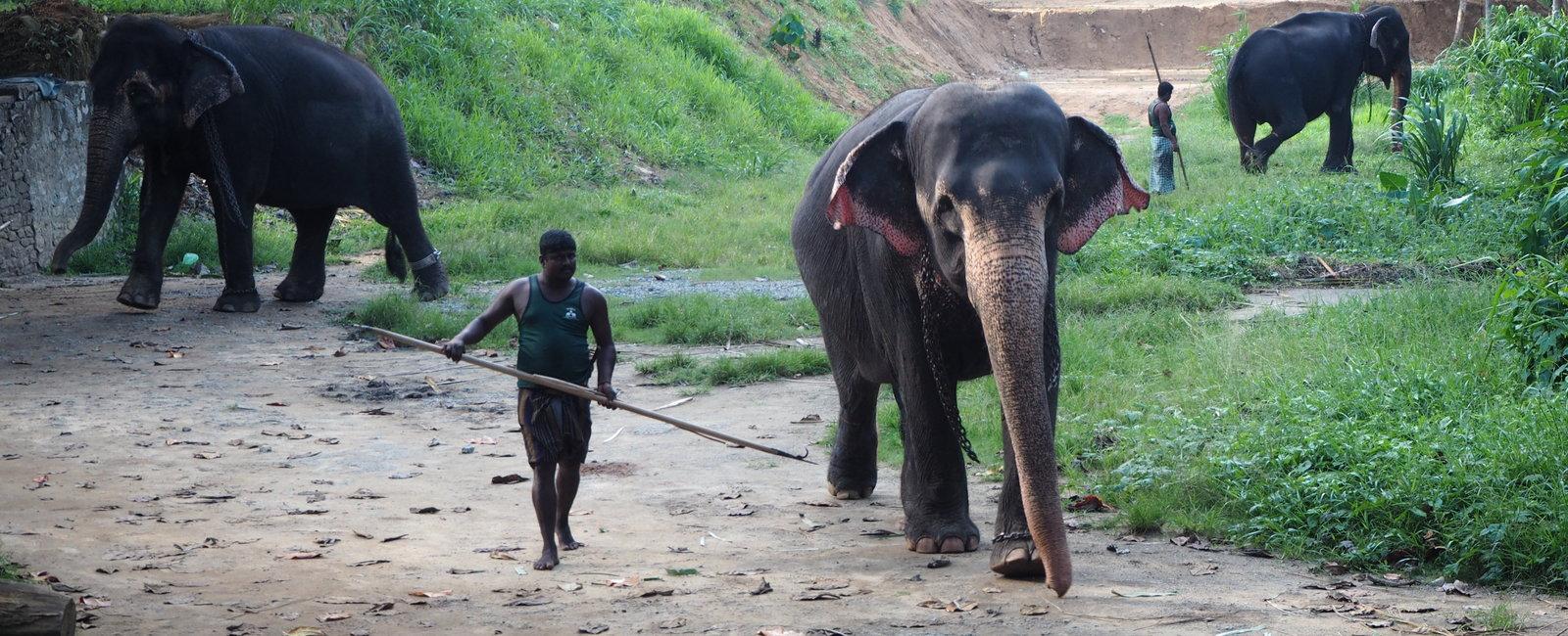 Ruth Sadler - Midwifery Electives in Sri Lanka Kandy