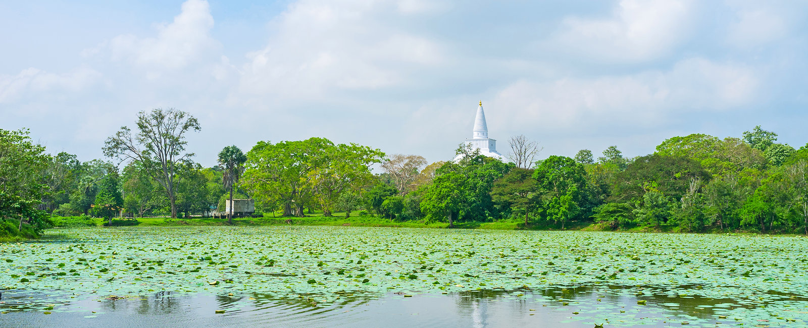 Volunteering placements in Sri Lanka